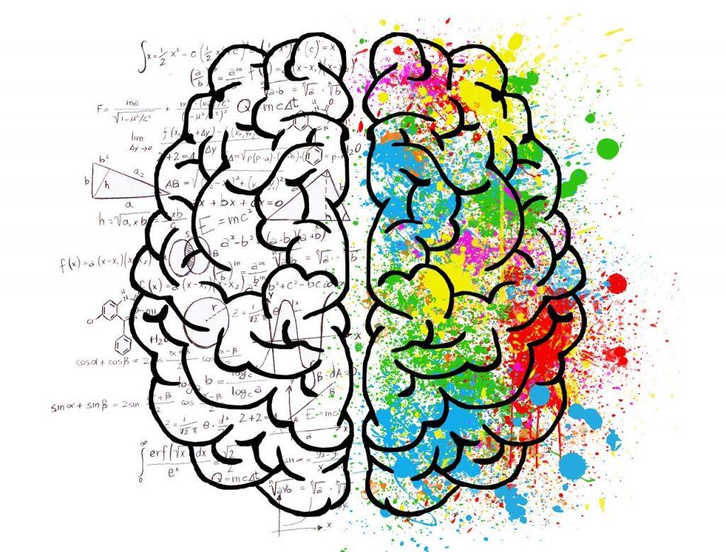 大脑两半球:一半理性、一半感性